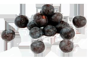 Acai Berry Supplements